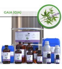 Gaia (Gia or Wild mountain) Essential Oil